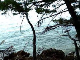 crickets meditation near the sea