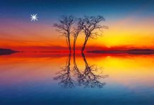 trees meditation
