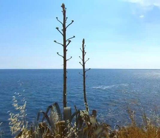 holy sea horizon